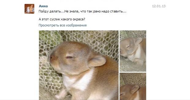 http://sd.uploads.ru/1t6ey.jpg