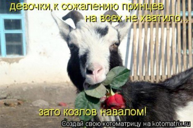 http://sd.uploads.ru/Db3Y0.jpg