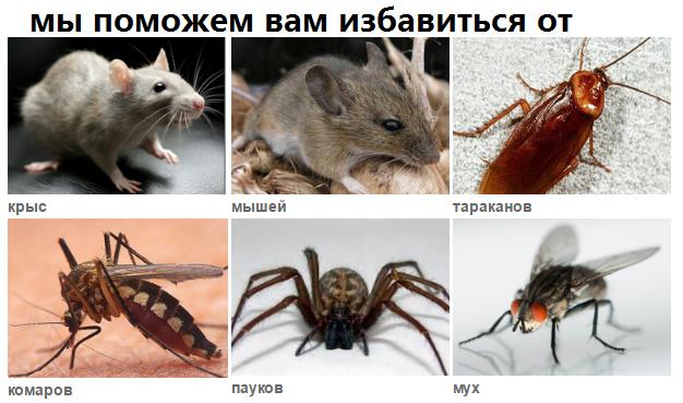 http://sd.uploads.ru/Enlec.png