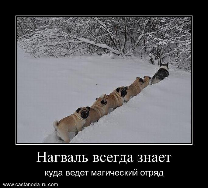 http://sd.uploads.ru/Ofvac.jpg