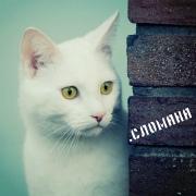 http://sd.uploads.ru/QEK2d.jpg