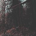 http://sd.uploads.ru/QyBHL.png