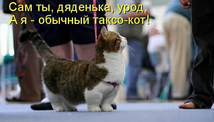 http://sd.uploads.ru/YI5MG.jpg