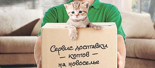 http://sd.uploads.ru/YoxdX.jpg
