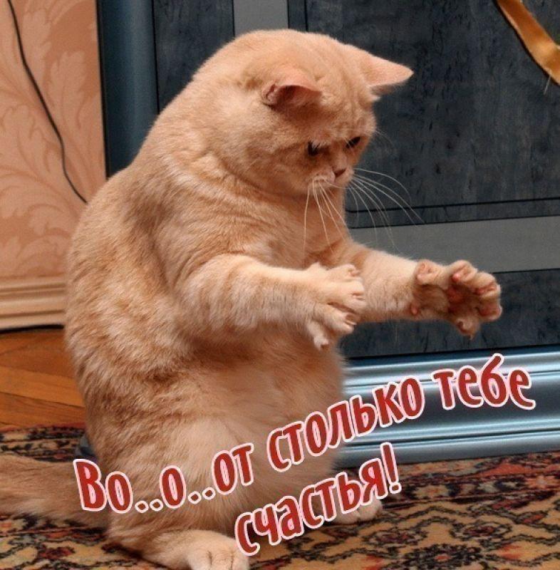 http://sd.uploads.ru/Zl4wd.jpg
