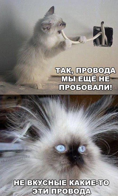 http://sd.uploads.ru/bQgrP.jpg