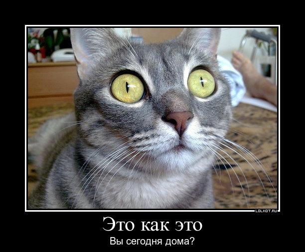 http://sd.uploads.ru/eDcrI.jpg