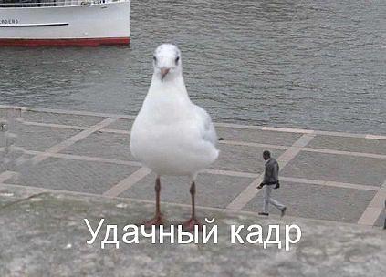 http://sd.uploads.ru/efnwS.jpg