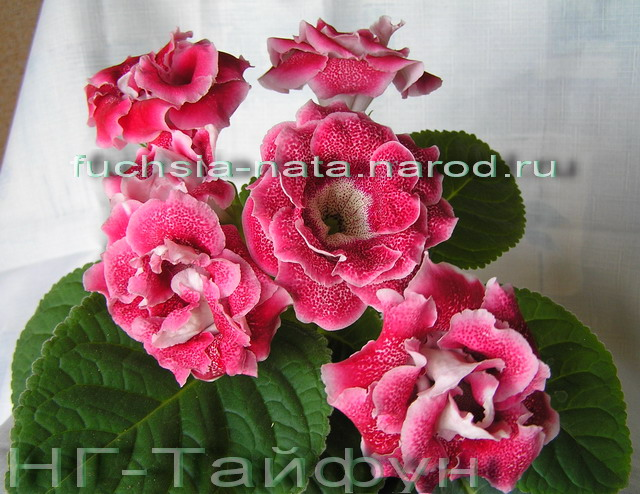 http://sd.uploads.ru/mLZqp.jpg