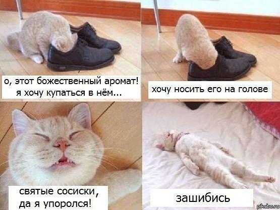 http://sd.uploads.ru/nMwbU.jpg