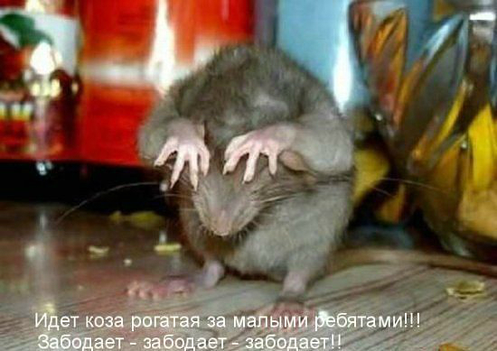 http://sd.uploads.ru/ndJr4.jpg
