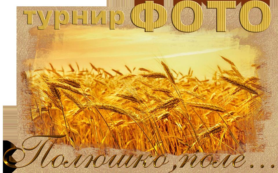 http://sd.uploads.ru/ozc1k.png