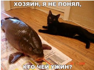 http://sd.uploads.ru/t/0k29Y.png