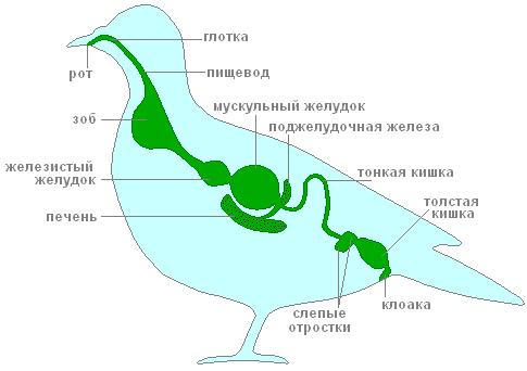 http://sd.uploads.ru/t/1Puax.png