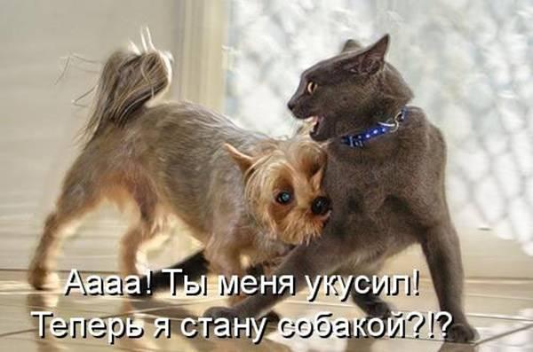 http://sd.uploads.ru/t/1Tj4t.jpg