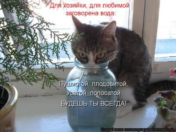 http://sd.uploads.ru/t/3CeEF.jpg