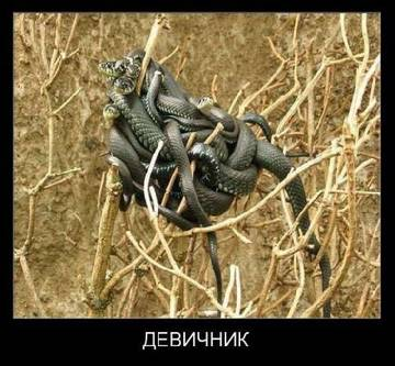 http://sd.uploads.ru/t/3KpMj.jpg