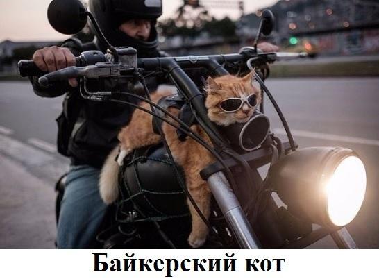 http://sd.uploads.ru/t/43QnO.jpg