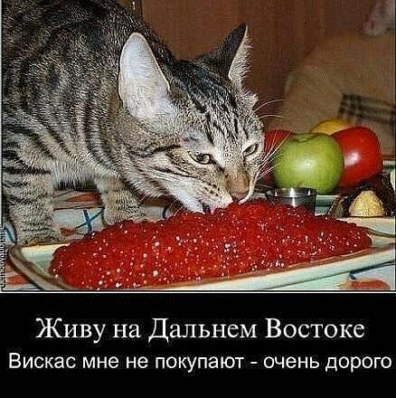 http://sd.uploads.ru/t/4OA0a.jpg