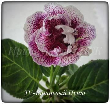 http://sd.uploads.ru/t/5cg0R.jpg