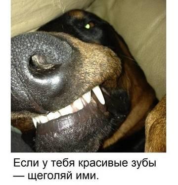 http://sd.uploads.ru/t/8T9EC.jpg