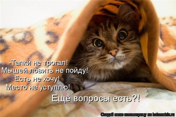 http://sd.uploads.ru/t/AoR6h.jpg