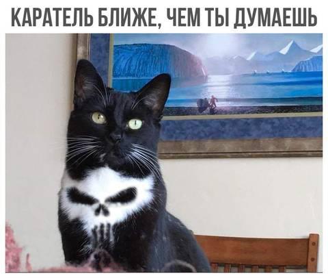 http://sd.uploads.ru/t/BPz9C.jpg