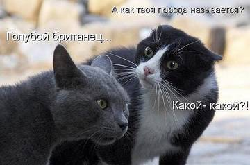 http://sd.uploads.ru/t/BSlfg.jpg