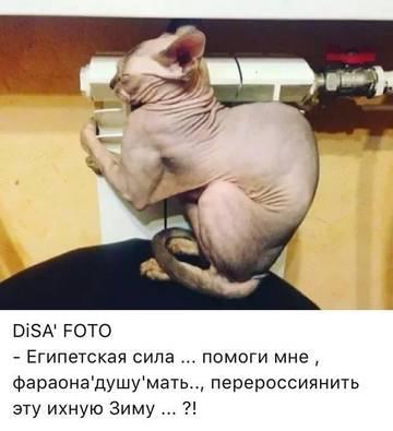 http://sd.uploads.ru/t/C7pfH.jpg