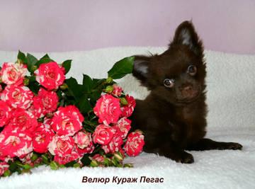 http://sd.uploads.ru/t/Dk9V4.jpg