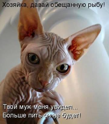 http://sd.uploads.ru/t/Fw94f.jpg