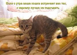 http://sd.uploads.ru/t/Gkn2u.jpg