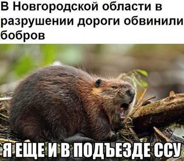 http://sd.uploads.ru/t/Gzvm6.jpg