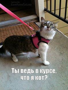 http://sd.uploads.ru/t/H4Gp9.jpg