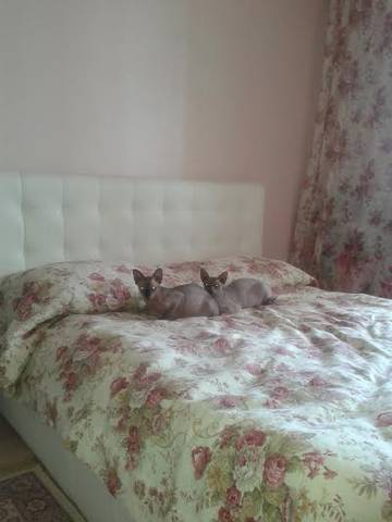 http://sd.uploads.ru/t/HrlcO.jpg