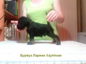 http://sd.uploads.ru/t/Iau2i.jpg