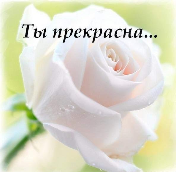 http://sd.uploads.ru/t/Jk0MZ.jpg