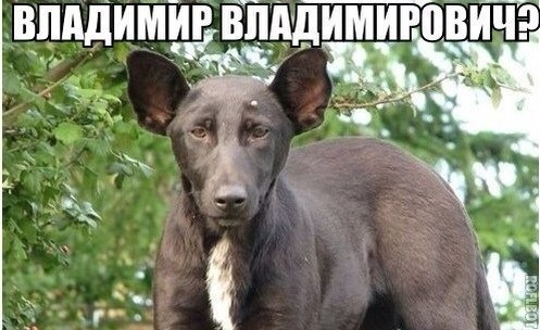 http://sd.uploads.ru/t/JnXAH.jpg