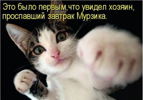 http://sd.uploads.ru/t/L4eSC.jpg
