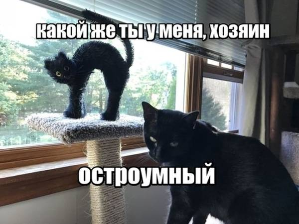 http://sd.uploads.ru/t/LBn0J.jpg