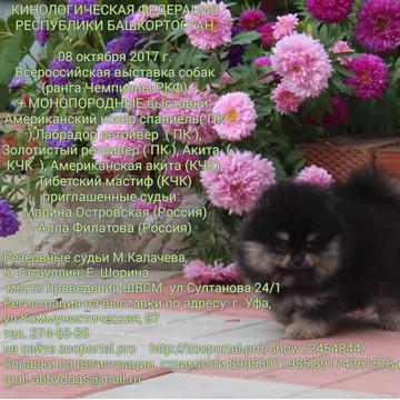 http://sd.uploads.ru/t/LIaMP.png
