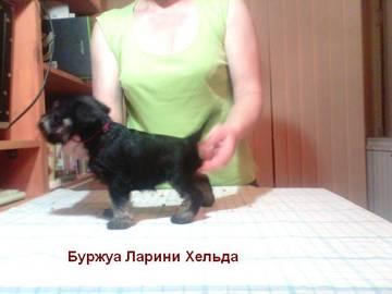 http://sd.uploads.ru/t/MESge.jpg