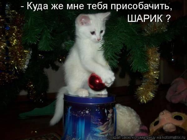 http://sd.uploads.ru/t/NESt6.jpg