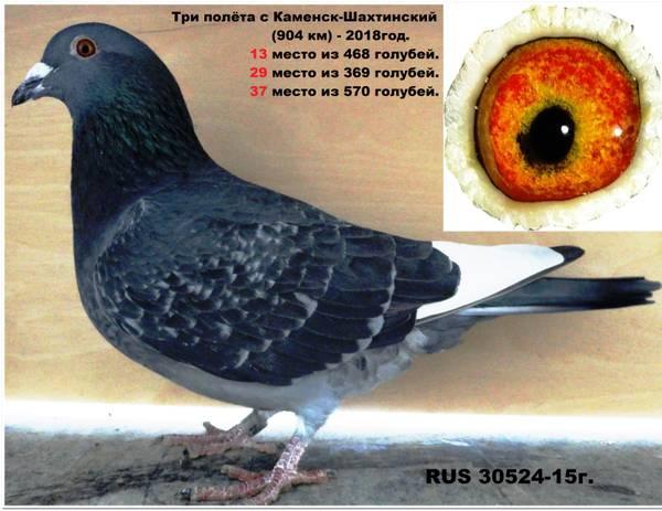 http://sd.uploads.ru/t/NvmP8.jpg