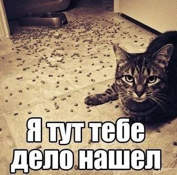 http://sd.uploads.ru/t/OA12b.jpg
