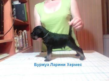 http://sd.uploads.ru/t/OT5jv.jpg