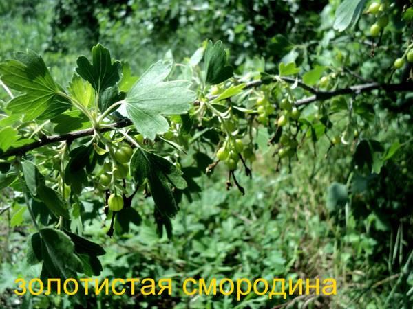 http://sd.uploads.ru/t/OW6bN.jpg