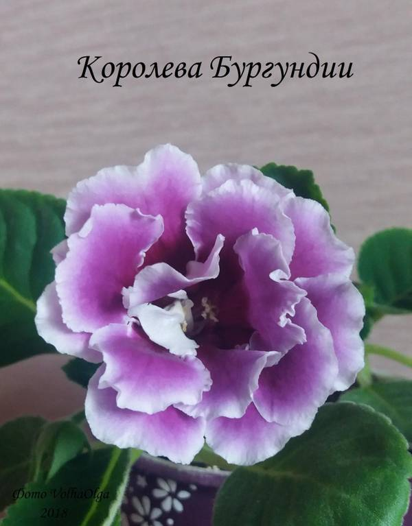http://sd.uploads.ru/t/OgtI0.jpg