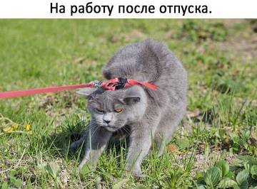 http://sd.uploads.ru/t/PKSLy.jpg
