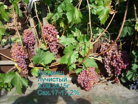 http://sd.uploads.ru/t/Puafl.jpg